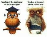 Teachers as Owls